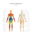 Anatomy guide Female skeleton and muscles map vector image vector image