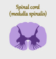 human organ icon in flat style spinal cord vector image vector image