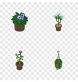 isometric plant set of flower houseplant vector image