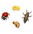 ladybug life cycle vector image vector image