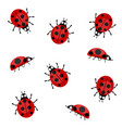 ladybugs on a white background vector image vector image