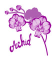 orchid flowers on white background and hand drawn vector image
