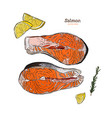 salmon steak hand drawn rosemary vector image vector image