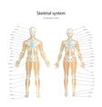 Anatomy guide Male and female skeleton with vector image vector image