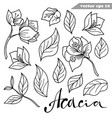 simple hand drawn acacia flowers set vector image vector image