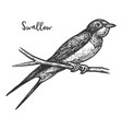 sketch swallow bird or martins martlet vector image vector image