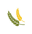 wheat oats logo vector image