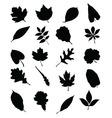 foliage 2 vector image vector image