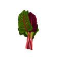 mangold fresh salad leaves healthy organic vector image vector image
