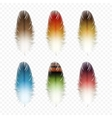 Set of Feathers Isolated vector image