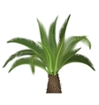 Tropical exotic high detailed palm tree