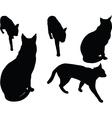 wild cat - vector image