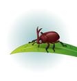 cartoon rhino beetle on leaf vector image