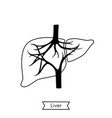 isolated of liver vector image