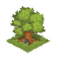isometric cartoon gigantic green oak tree vector image vector image