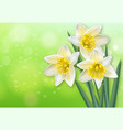 narcissus spring flowers realistic vector image vector image