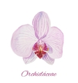 Orchid watercolor painting on white background vector image vector image
