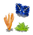 set of colorful marine algae isolated on white vector image vector image