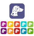 dalmatians dog icons set vector image