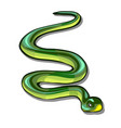 green snake isolated on white background vector image vector image