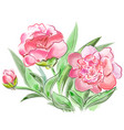 meadow flowers peonies isolated on white vector image vector image