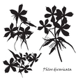 Set of flowers phlox divaricata with leafs Black vector image vector image