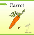 carrots series of vegetables and ingredients for vector image vector image