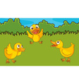 Chicks in a field vector image vector image