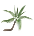 coco nut tropical exotic high detailed palm vector image vector image