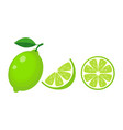 colorful whole half and slice lime with green vector image vector image