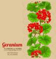 geleranium background vector image vector image