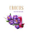 greeting card with blue crocuses red ribbon vector image vector image
