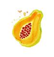 juicy ripe papaya fruit watercolor hand painting vector image