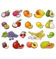 set tropical fruits black vintage vector image vector image