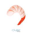 shrimp in cartoon style vector image vector image