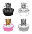 bathing pet puppy in a bowl dogpetdog care vector image