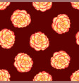 begonia flower picotee sunburst on red background vector image vector image