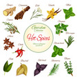 hot spice herb and condiment poster design vector image vector image