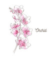 pink orchid on white background vector image vector image