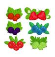 set of garden berries isolated vector image