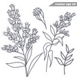 simple hand drawn mimosa flowers set vector image vector image