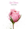 watercolor pink rose isolated card wedding vector image vector image