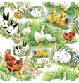 Little fluffy cute watercolor ducklings chickens vector image vector image