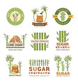 sugarcane plants harvest farm sweets granulated vector image vector image
