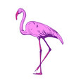 beautiful pink flamingo on a white background vector image vector image