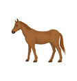 lovely brown horse standing isolated on white vector image