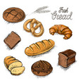 set of fresh bread and buns hand drawn vector image