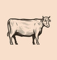cow is standing in full growth side view meat vector image