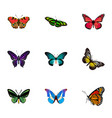 realistic pipevine bluewing tropical moth and vector image vector image