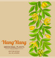 ylang pattern on color background vector image